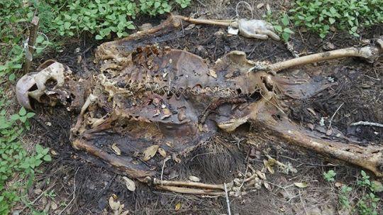3_us3gkn খাঁচার মধ্যে কেনো রাখা হয়েছে মানুষ গুলো কে ? কারন টা জানলে অবাক হবেন, বাচ্চারা দেখো না…