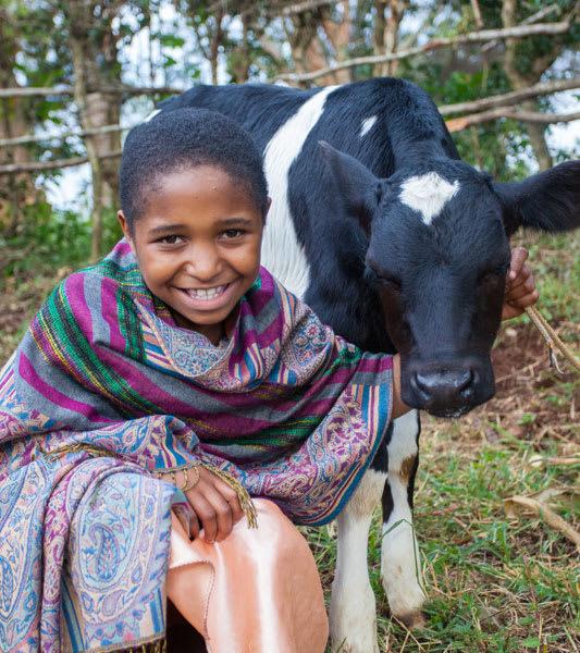 Cows GC Spring 2020