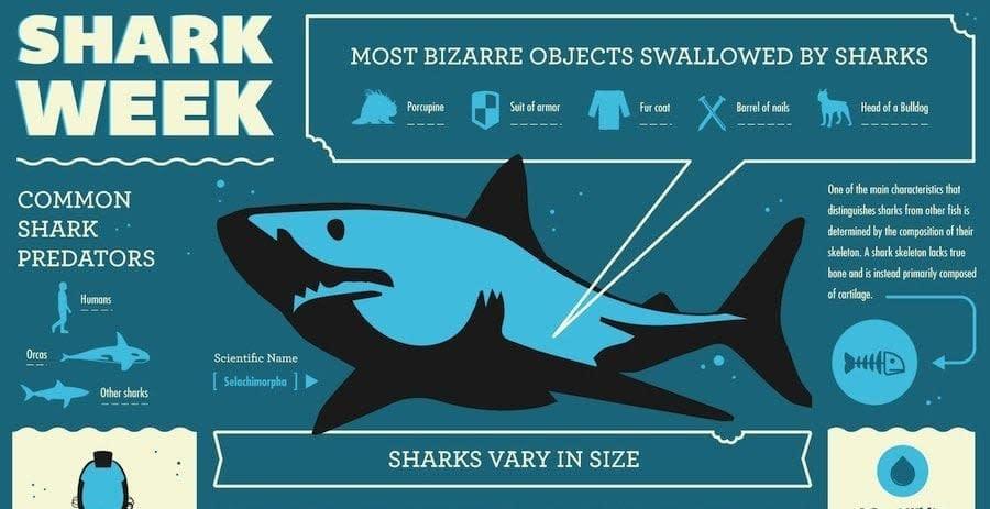 Shark_Week_Infographic