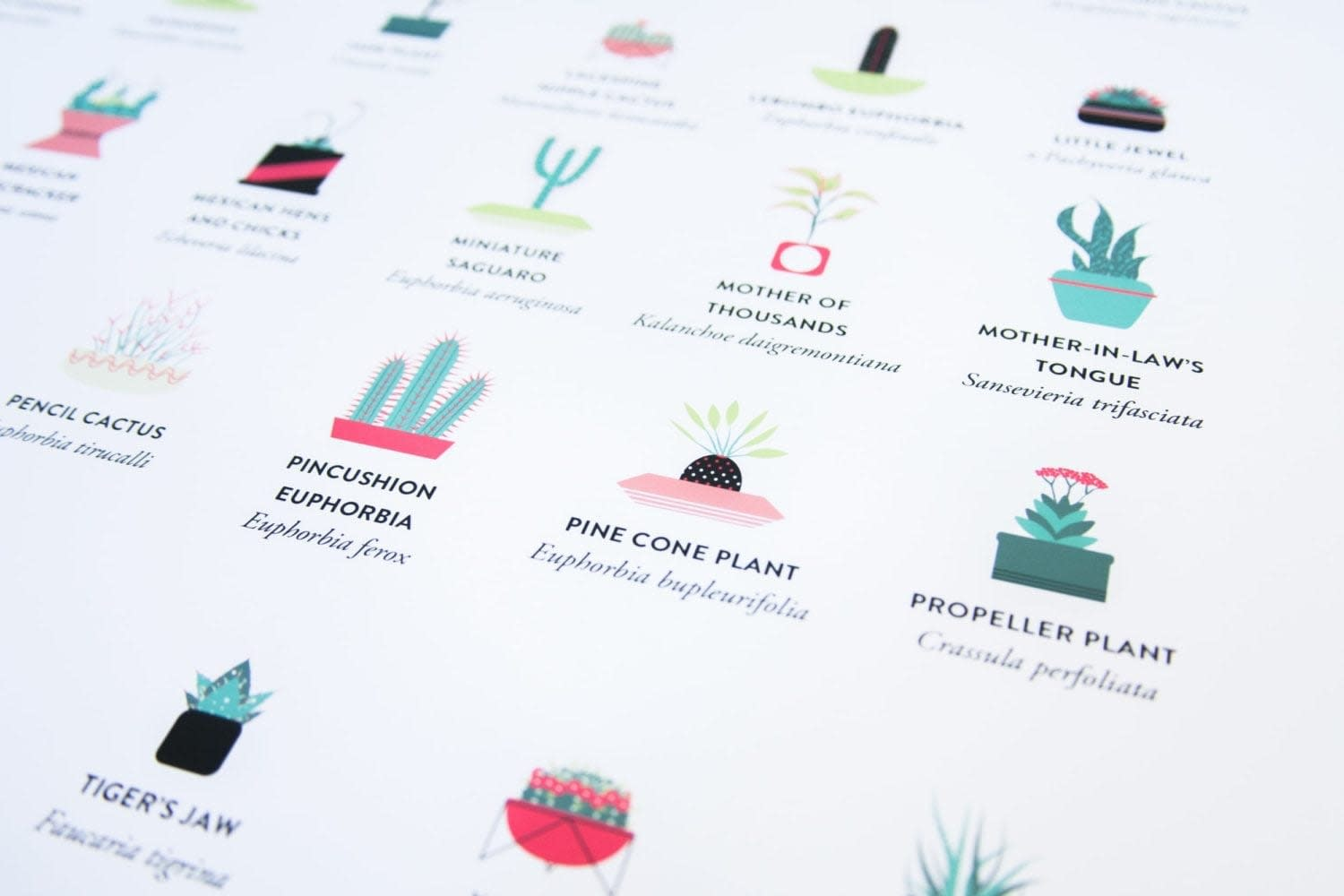 Succulents_And_Cacti_Killer_Foundry