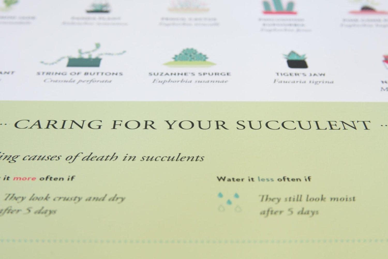 Succulent_Poster