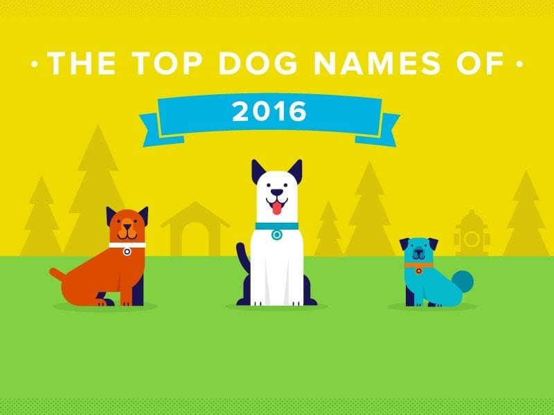 Infographic design for lifestyle pets brand showing 3 dogs