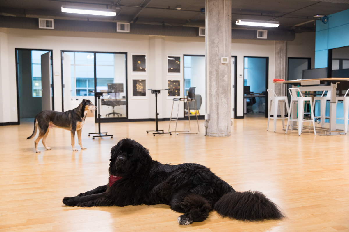 Dogs in Visual Communication Agency Office