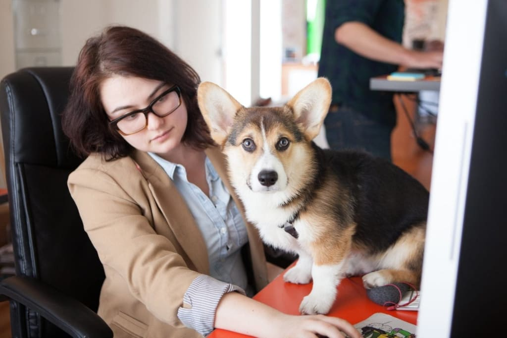 Alexandra_Blackstone_Office_Dog
