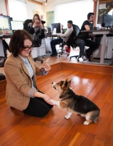 Alexandra_Blackstone_Office_Dog_02
