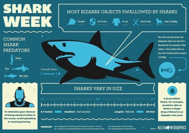 Shark_Week_Facts_Infographic