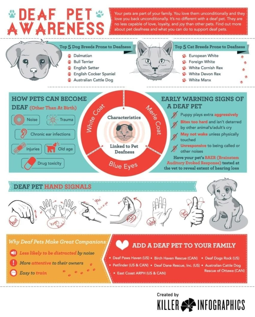 Deaf Pet Awareness Infographic