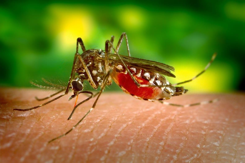 पहचानिए डेंगू के मच्छर और बुखार को और जानिए बचाव के उपाय