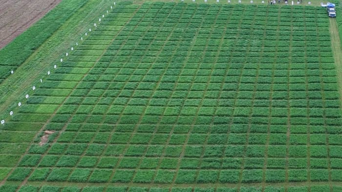 2018 Wisconsin Alfalfa Trial Blocks