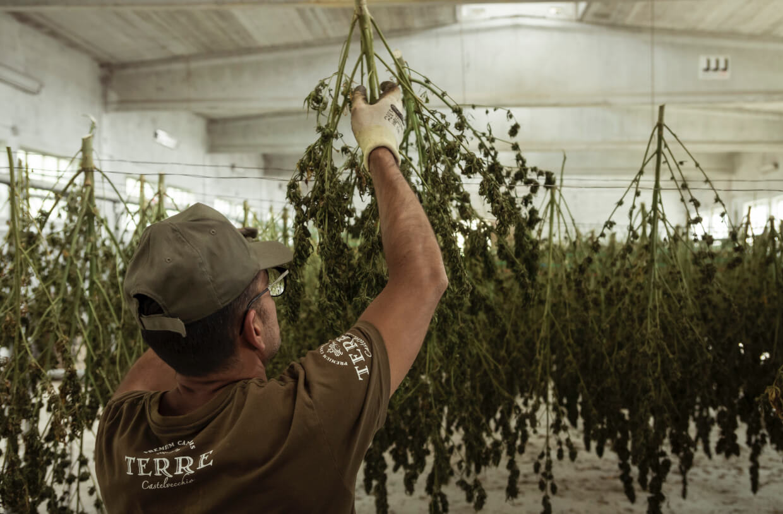 cannabis dispensary growth 2021