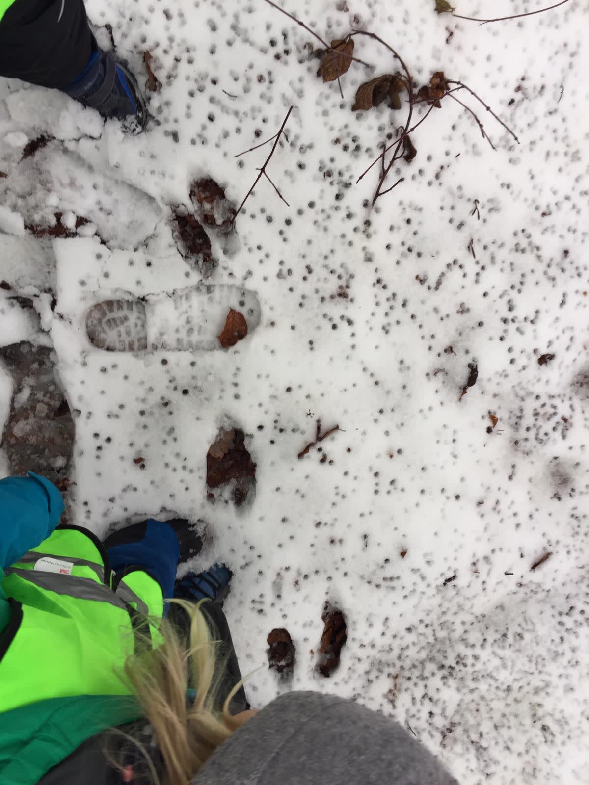 spurensuche im schnee