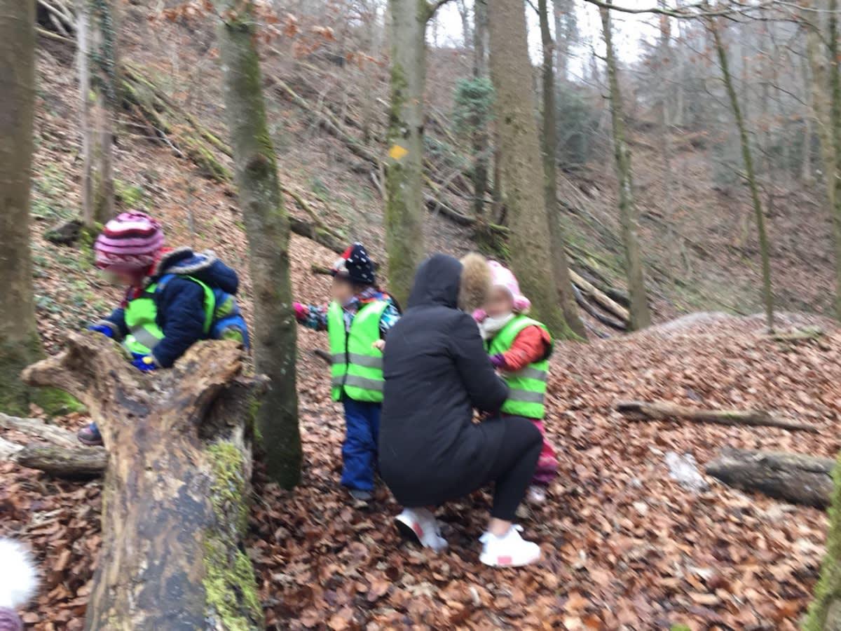Neues im Wald entdecken