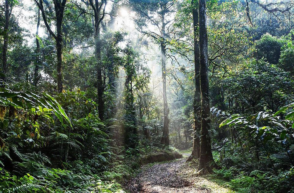科見Online線上學習-新聞英語-亞馬遜熱帶雨林濫伐