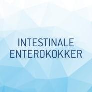 Vannanalyse Intestinale Enterokokker