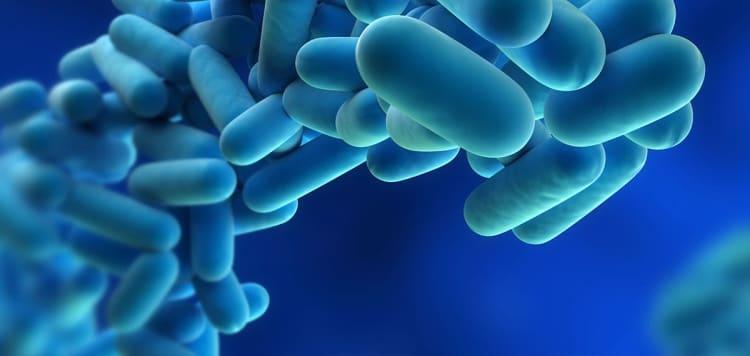 Legionella