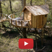 Tawny Owl tree house video