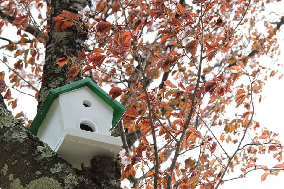 autumn home buying