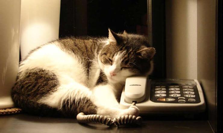 cat into telephone