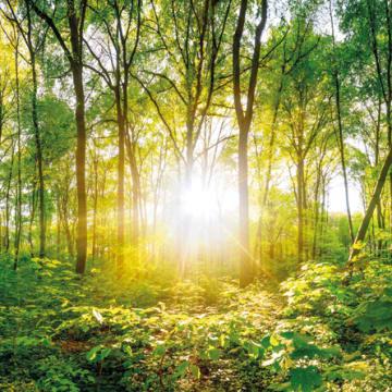 Duurzame groei sinds 1925