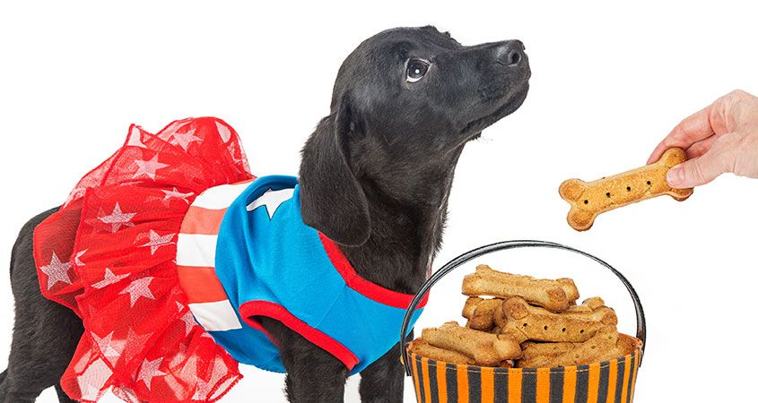 Homemade Dog Food & Dog Treats