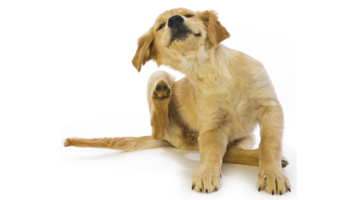When Should I Take My Dog Off Of Puppy Food
