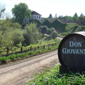 Don Giovanni em sua melhor forma exalta a safra 2020