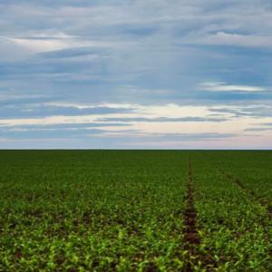 Brasil deverá ter produção recorde de grãos