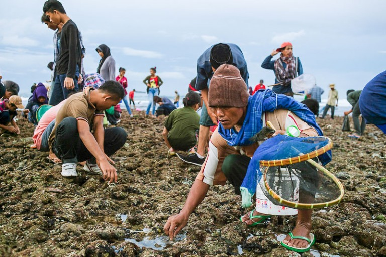 Festival Bau Nyale, Lombok
