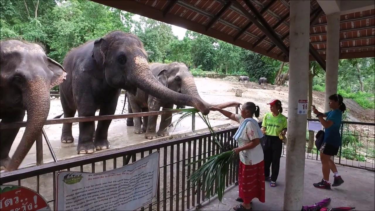 Peduli Hewan Binatang