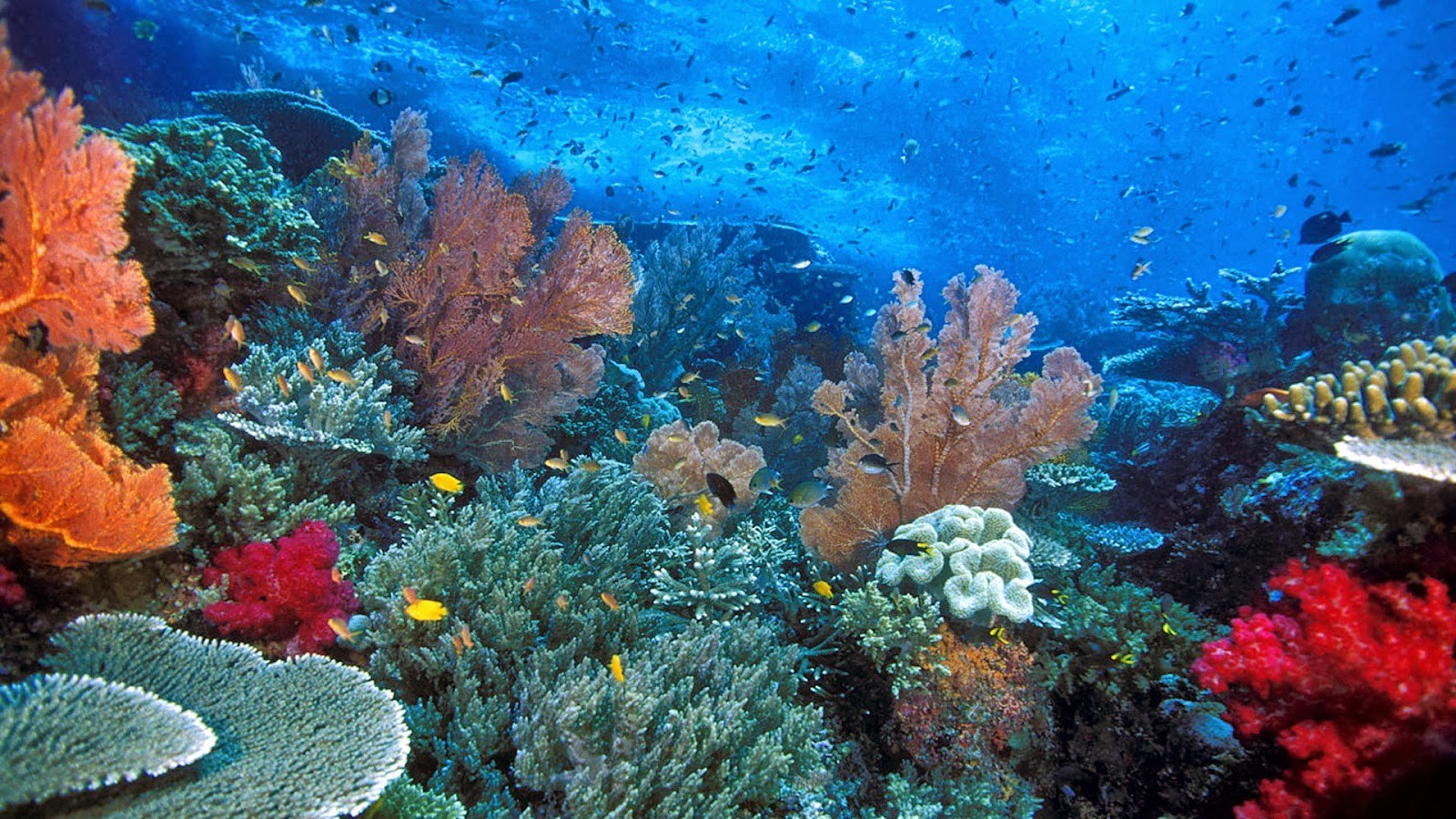 Bawah Laut Pulau Weh