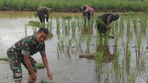Koramil 1011-04/Selat melaksanakan pendampingan pertanian di kec.selat dan kec. Bataguh