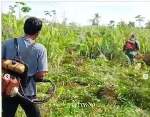 Pembukaan Lahan Pertanian Baru Oleh Babinsa Koramil 1015-09/Baamang Bersama Kelompok Tani