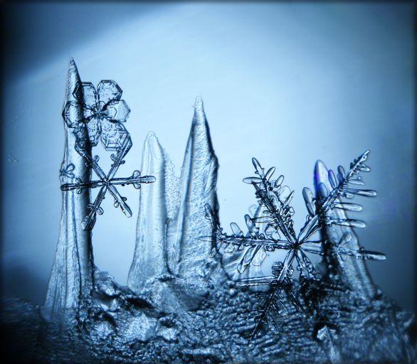 Снежные хлопья и лёд на стекле. Фотография особо интересна, во-первых, тем, что сделана на самодельный микроскоп. А во-вторых, потому что её автором является российский фотограф Сергей Кичигин из Вологды.