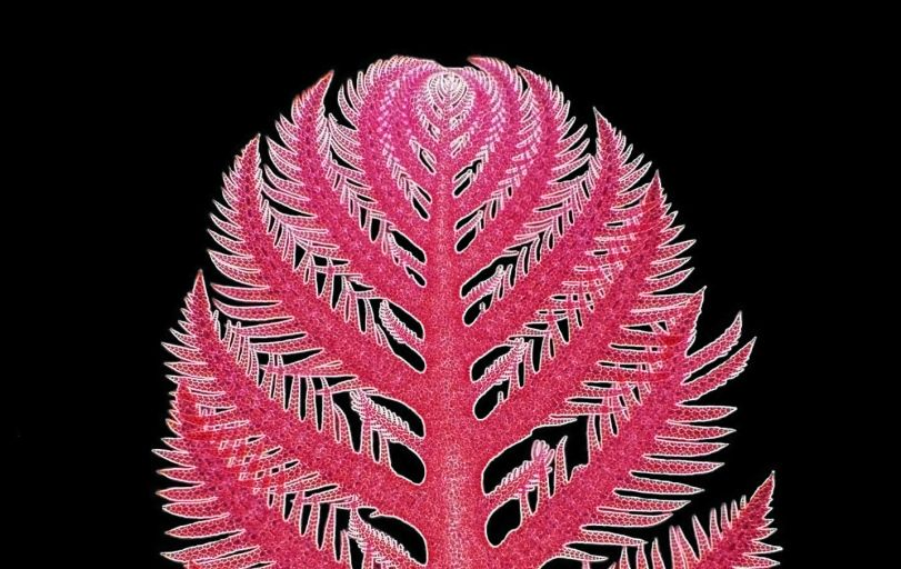 Просто симпатичная красная водоросль.