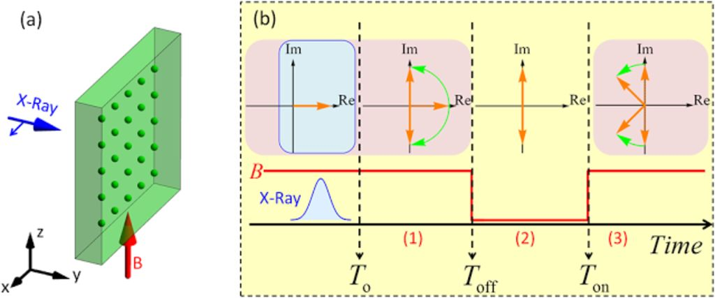 (а) Геометрия предлагаемого эксперимента. (б) схематическое изображение этапов взаимодействия: T<sub>0</sub> — момент поглощения фотона, T<sub>off</sub> — момент выключения магнитного поля, T<sub>on</sub> — момент обратного включения поля.