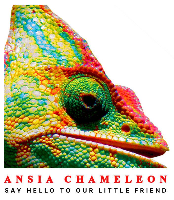 Ansia, Chameleon, 2009, Ανεξάρτητο Χιπ-Χοπ Άλμπουμ, Αθήνα, Νέα Φιλαδέλφεια