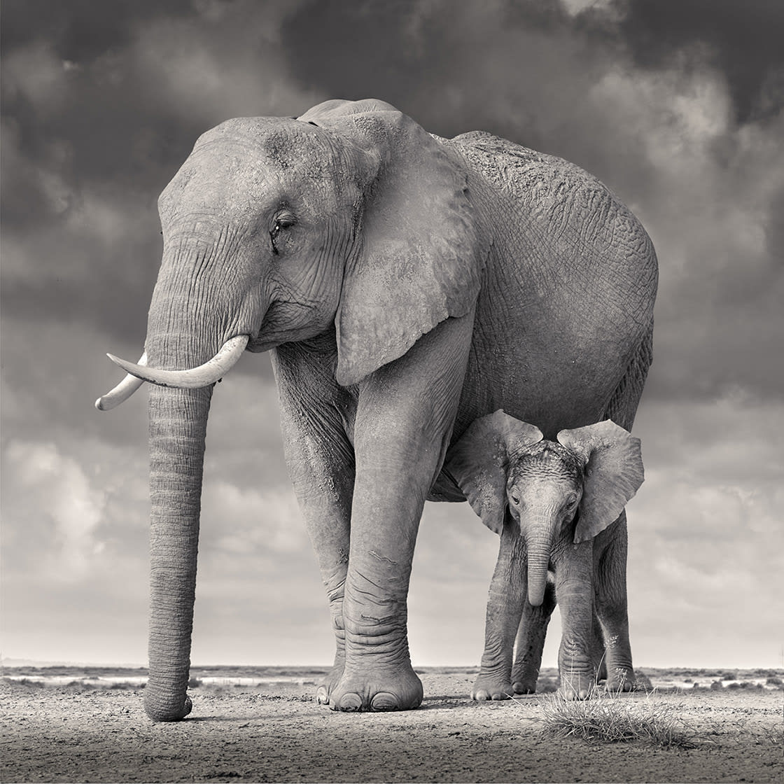 Elephant Mother and Calf, Amboseli, 2020 - David Burdeny at Kostuik Gallery