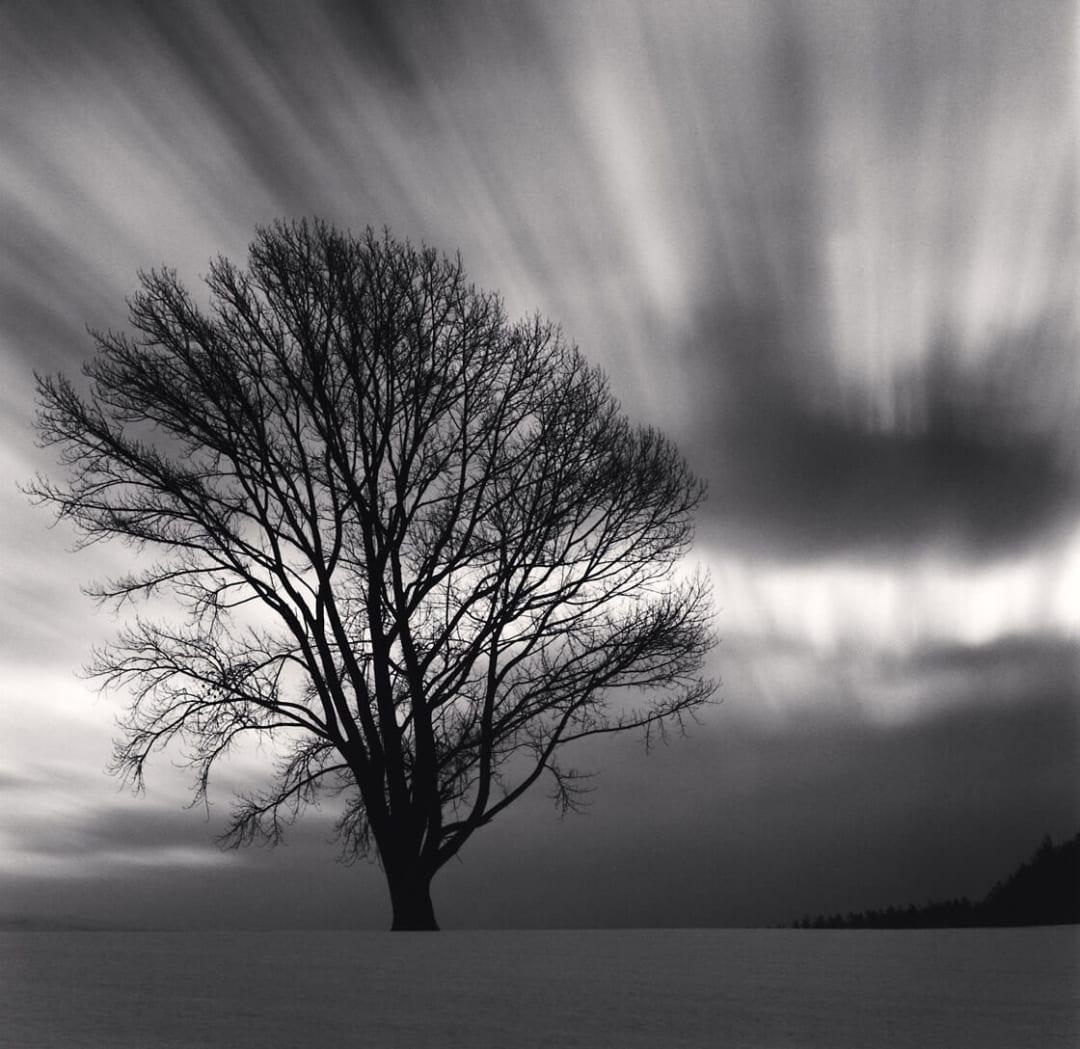 Philosopher's Tree, Study 3, Biei, Hokkaido, Japan - Michael Kenna