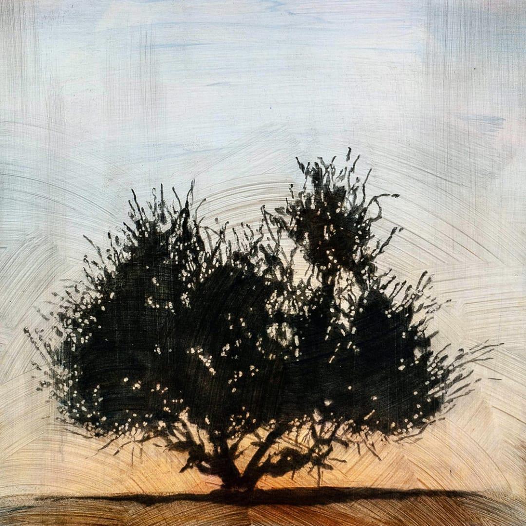 """Tree 3, 16"""" x 16"""" - Stephen Hutchings"""