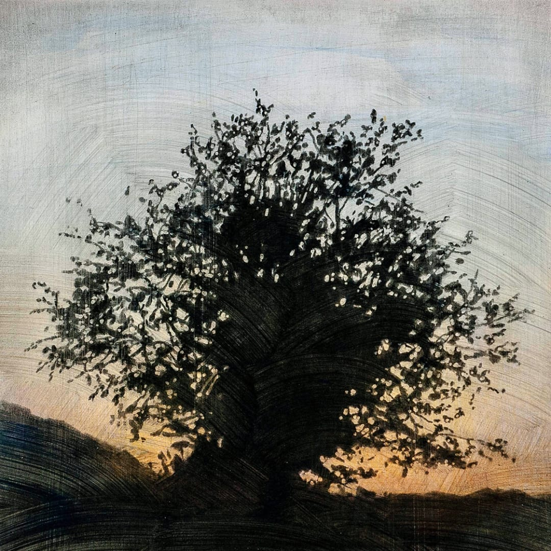 """Tree 7, 16"""" x 16"""" - Stephen Hutchings"""