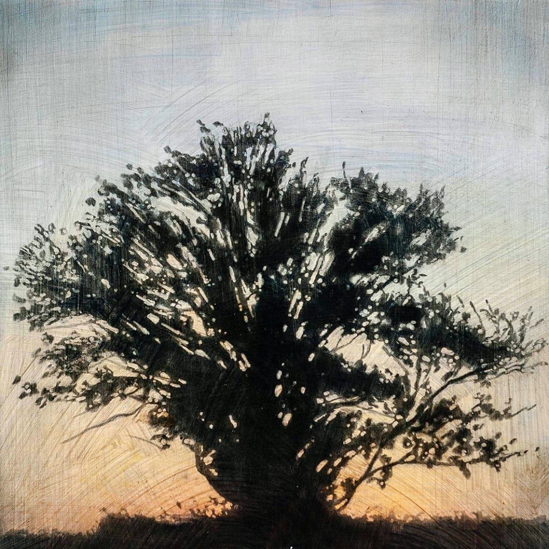 "Tree 1, 16"" x 16"" - Stephen Hutchings"