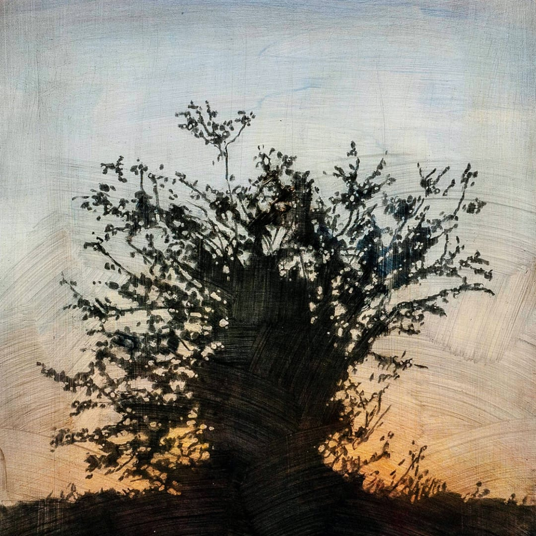 "Tree 11, 16"" x 16"" - Stephen Hutchings"