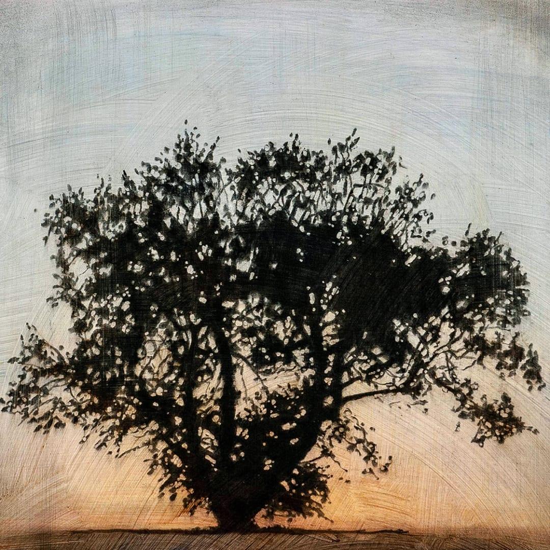 """Tree 12, 16"""" x 16"""" - Stephen Hutchings"""
