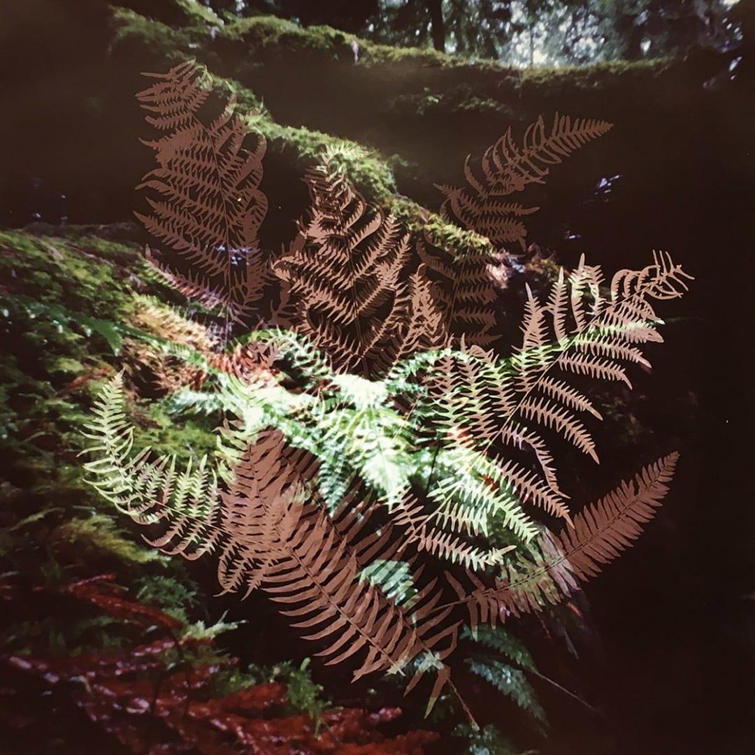 Dianne Bos - Understory 11.2, Bowen Island, British Columbia, 2020