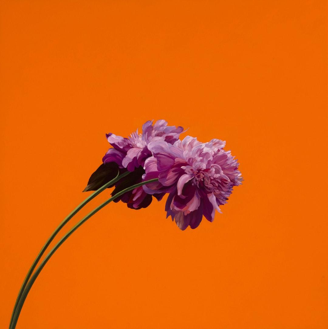 James Lahey- Peony (Orange), 2021
