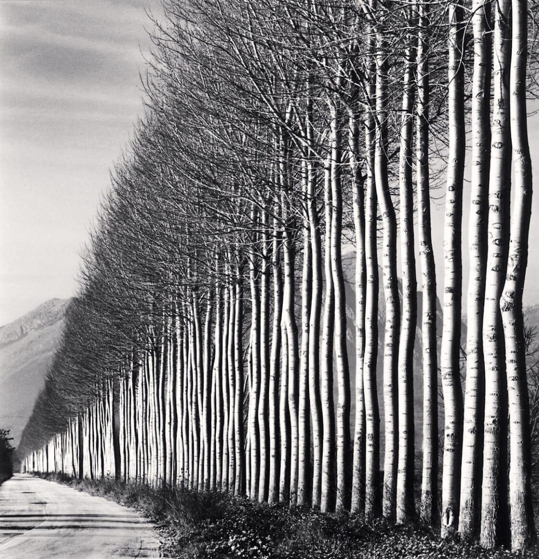 Poplar Trees, Fucino, Abruzzo, Italy - Michael Kenna