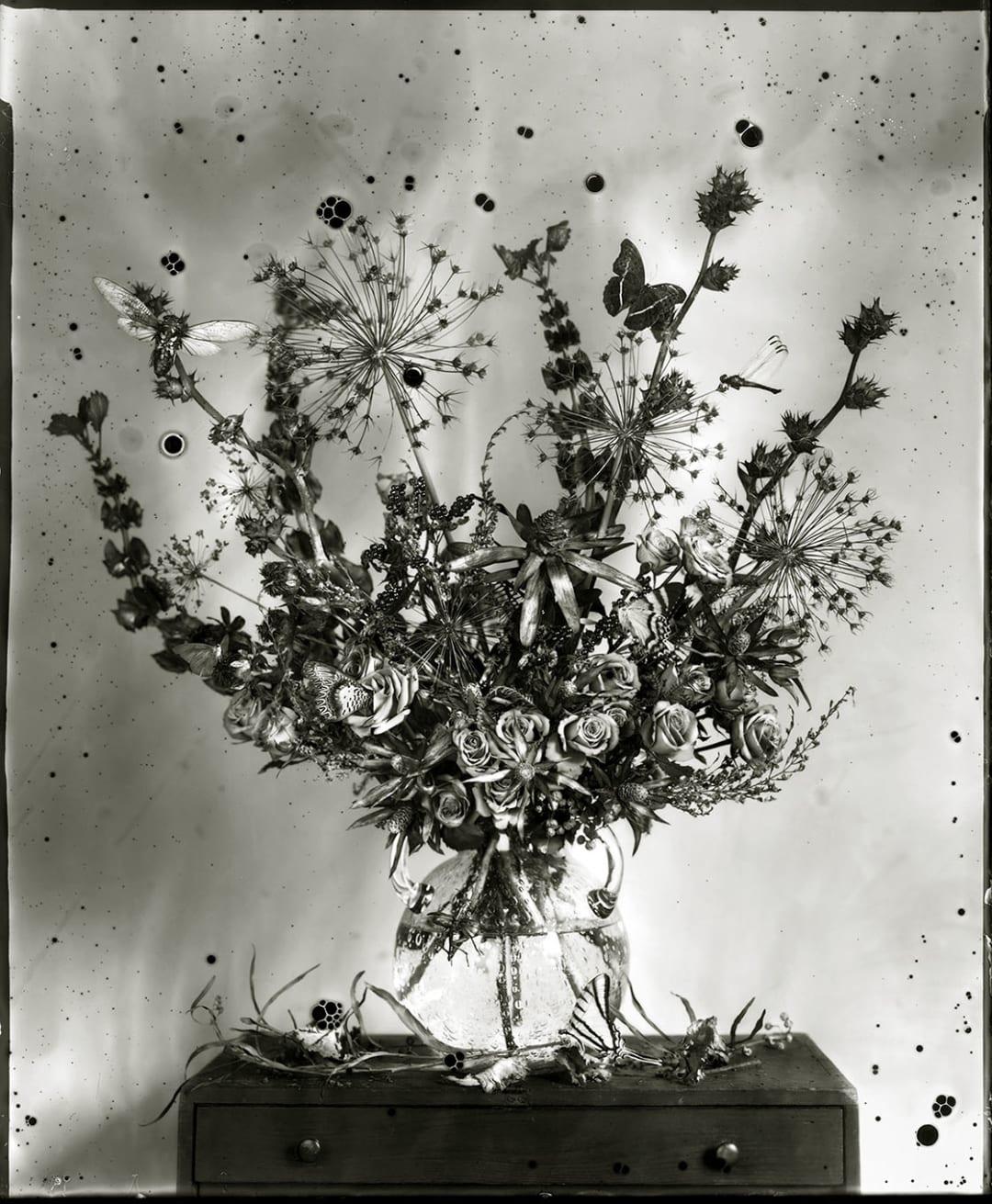 Fin, 2017 - Whitney Lewis-Smith
