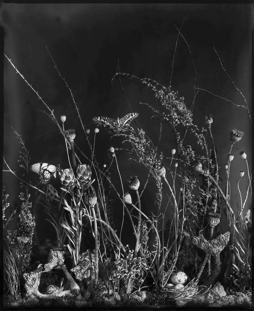 Underbrush 1, 2016 - Whitney Lewis-Smith