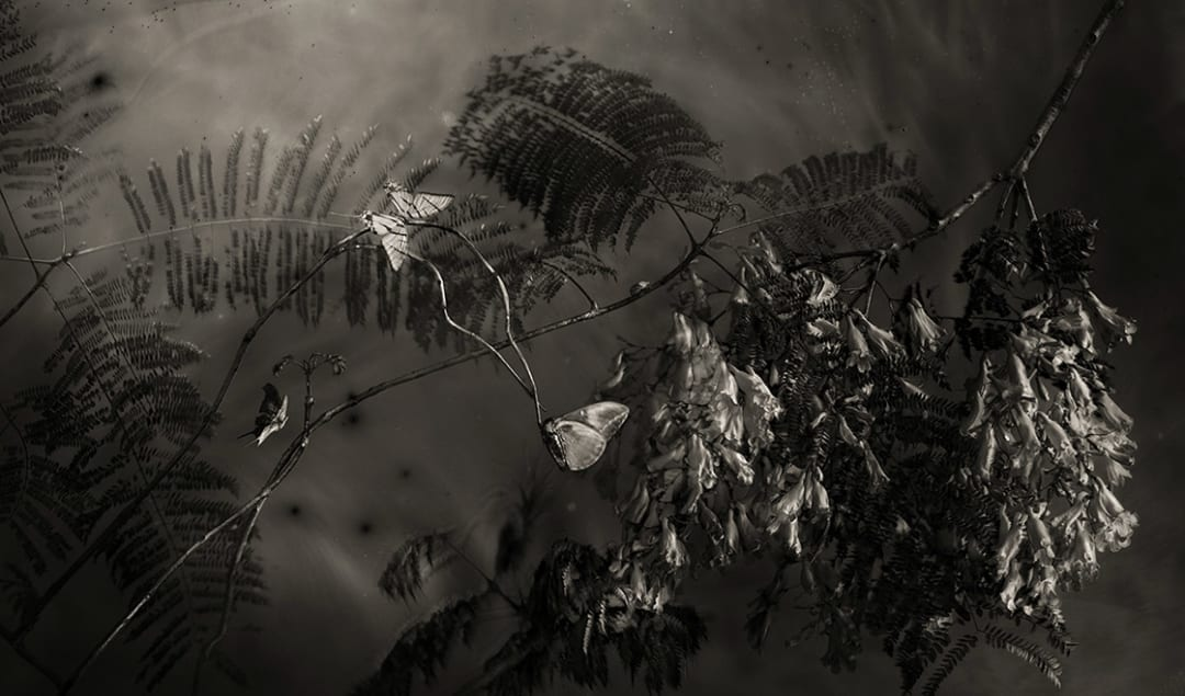 Whitney Lewis-Smith- Jacarandas at Night In Parque Mexico, 2021