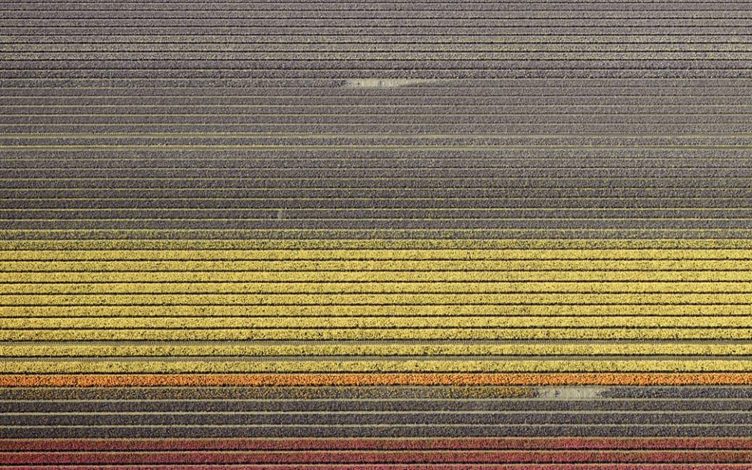 Veld 17, Noordoostpolder, Flevoland, The Netherlands, 2016